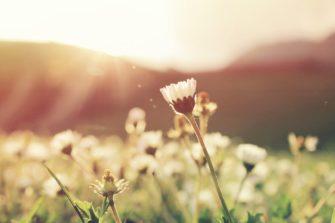 Kukkia niityllä